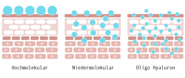 Hyaluron Molekülgröße